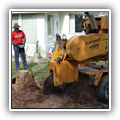 Stump grinding and removal in Pinecrest, FL